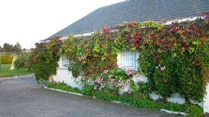 Mountain View Cottage
